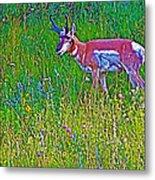 Pronghorn Among Wildflowers In Custer State Park-south Dakota Metal Print