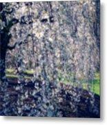 Prunus Subhirtella 'pendula' Metal Print