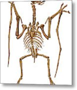 Pterodactylus, Extinct Flying Reptile Metal Print