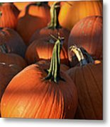 Pumpkin Patch Metal Print