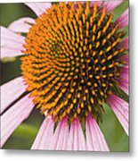 Purple Cone Flower Echinacea Metal Print