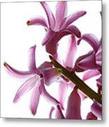 Purple Hyacinth Macro Shot. Metal Print
