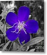 Purple Passion Metal Print by Joe McCormack Jr