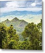 Queensland Rainforest Metal Print