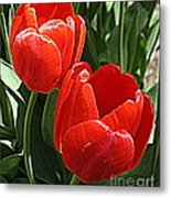 Radiant In Red - Tulips Metal Print