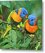 Rainbow Lorikeet Pair Metal Print