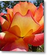 Rainbow Sorbet Rose Close Up Metal Print by Denise Mazzocco