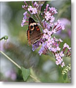 Red Admiral Butterfly Metal Print