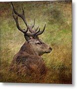 Red Deer  Cervus Elaphus Metal Print