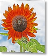 Red Face Sunflower At Olympia Metal Print