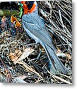 Red-faced Warbler At Nest With Young Metal Print