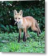 Red Fox Kit Metal Print