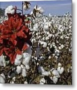 Red In The Cotton  Metal Print
