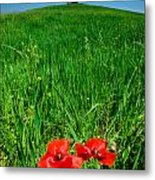 Red Poppies And Oak Metal Print