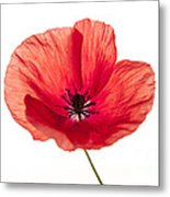 Red Poppy Flower Metal Print
