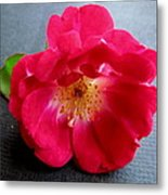 Red Rose Metal Print by Joyce Woodhouse