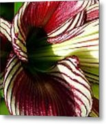 Red Striped Lily Metal Print