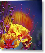 Red Yellow Blossoms 10197 Metal Print