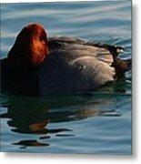Redhead Duck Metal Print