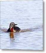 Redthroated Loon Metal Print