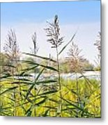 Reed Flowers Metal Print