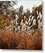 Reeds Highlighted By The Sun Metal Print