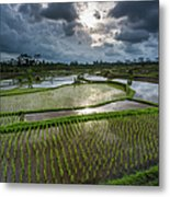 Rice Terraces In Central Bali Indonesia Metal Print