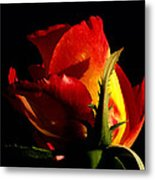 Rising Rose Metal Print