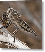Robber Fly And Prey Metal Print