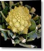 Romanesco - Italian Broccoli Metal Print