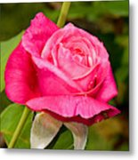 Rose Flower Metal Print