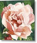 Rose In Pink Metal Print