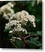 Rowan Flowers Metal Print