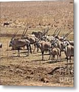 Safety In Numbers Metal Print