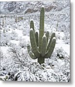 Saguaro Cactus After Rare Desert Metal Print