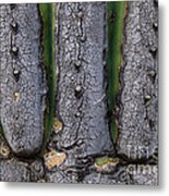 Saguaro Cactus Close-up Metal Print
