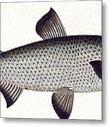 Salmon Metal Print