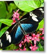 Sara Longwing Butterfly Metal Print