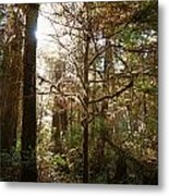 Save The Rain Forests Metal Print