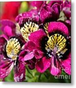 Schizanthus From The Hit Parade Mix Metal Print