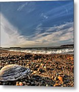 Sea Shell Sea Shell By The Sea Shore At Presque Isle State Park Series Metal Print