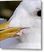 Seagull Portrait Metal Print
