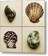 Seashell Composite Metal Print