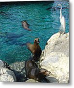 Seaworld Sea Lions Metal Print