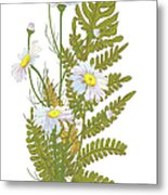 Set Of Chamomile Daisy Bouquets White Metal Print