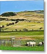 Sheep In Meadow Metal Print