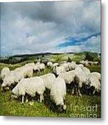 Sheep In The Field Metal Print