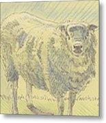 Sheep Sketch Metal Print
