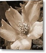 Single Portulaca Metal Print