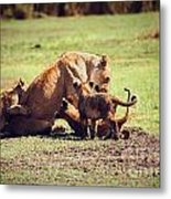 Small Lion Cubs With Mother. Tanzania Metal Print